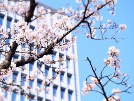 桜:イメージ画像
