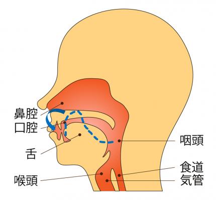 ラ行の舌の位置を表したイラスト